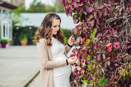 A pregnant young woman standing at the red autumn hedge, holding belly. pregnant woman relaxing in the park. Lovely prospective mother