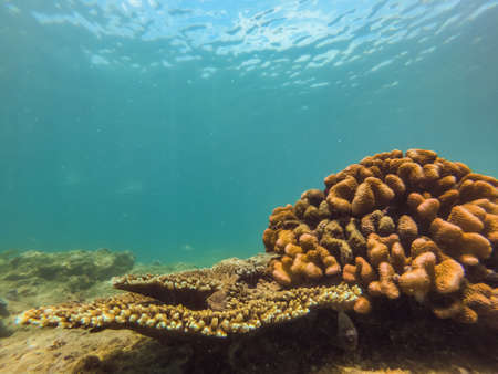 Photo pour Many fish, anemones and sea creatures, plants and corals under water near the seabed with sand and stones in blue and purple colors seascapes, views, sea life. - image libre de droit