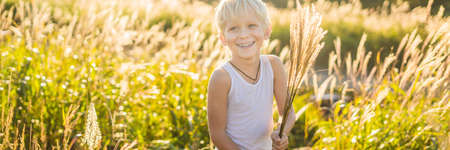 Beautiful happy smiling little boy among the cornfields touching plants with his hands BANNER, LONG FORMAT