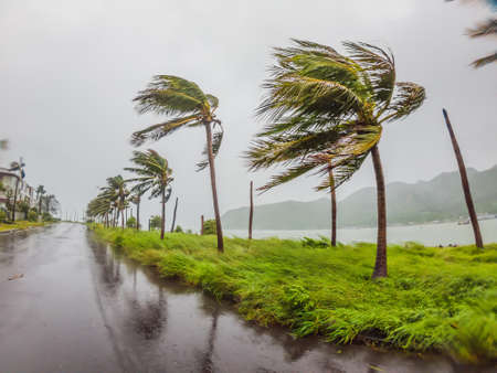 Photo for Tropical storm, heavy rain and high winds in tropical climates - Royalty Free Image