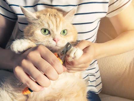 Foto de Young girl cuts the claws of a beautiful cream kitten with green eyes - Imagen libre de derechos