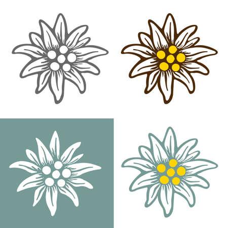 Illustration pour edelweiss flower icon vector alpine icon flat web sign symbol label - image libre de droit