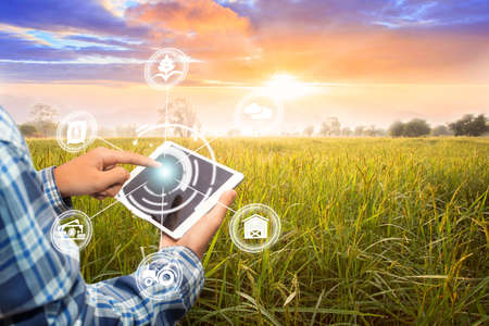 Photo pour Innovation technology for smart farm system, Agriculture management, Hand holding smartphone with smart technology concept. asian male farmer working in Sugarcane farm To collect data to study. - image libre de droit