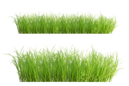 Photo pour Rice seedlings isolated on white background. Green Grass Border isolated on white background.The collection of grass.The grass is native to Thailand is very popular in the front yard. - image libre de droit