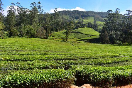 Photo pour Meghamalai High Wavy Mountains - The Hidden Paradise - image libre de droit