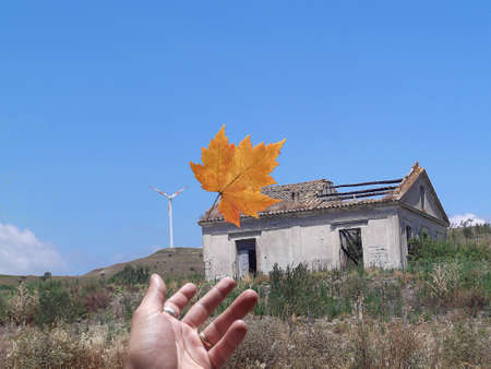Foto per the leaf - Immagine Royalty Free
