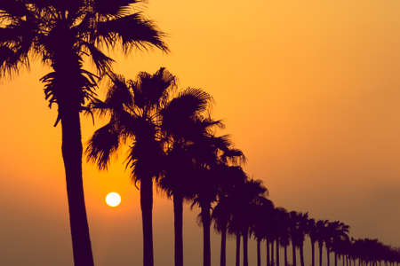 Photo pour Tropical Palm Trees Silhouettes in a row during sunset. Travel background - image libre de droit