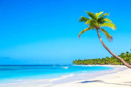 Photo pour Palm tree on the caribbean tropical beach. Saona Island, Dominican Republic. Vacation travel background. - image libre de droit