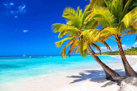 Photo for Palm trees on the caribbean tropical beach. Saona Island, Dominican Republic. Vacation travel background. - Royalty Free Image