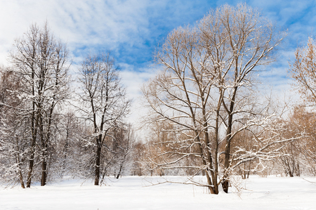 Photo for Cold winter forest in the afternoon covered with snow - Royalty Free Image