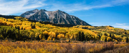 Photo pour Golden Leaves of Aspen Trees in the Beautiful Rocky Mountains of Colorado. - image libre de droit