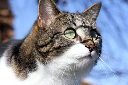 Curious look of a kitten