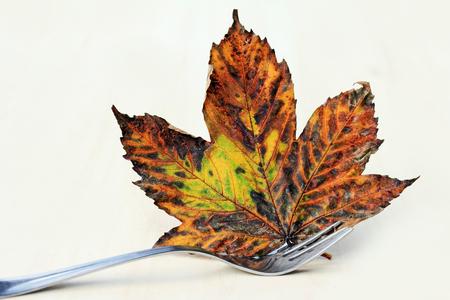 Autumn on the table. A fork holds on an autumn leaf