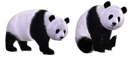 Photo for panda - Royalty Free Image