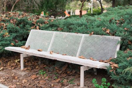 white bench in the garden between green bushes
