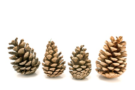 Four pine cones isolated on white