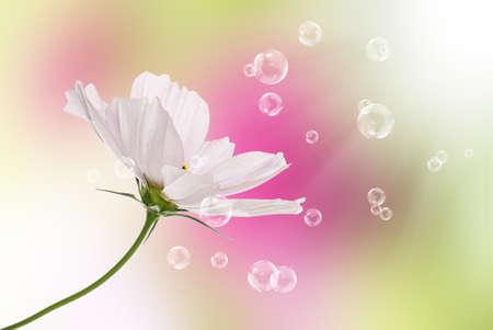 Flowers decorative beautiful holidays card