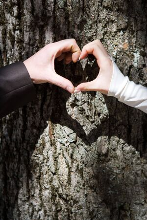 Couples hands forming heart shape with tree trunk in background.