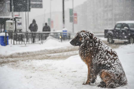 Foto de Stray dogs out in the snow during a cold and snowy winter day. - Imagen libre de derechos