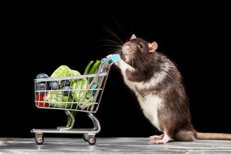 Cute rat with a shopping cart at a store