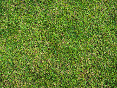 Pattern Of green japan grass