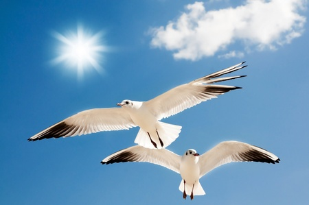 Photo for two seagulls are flying against the blue sky - Royalty Free Image