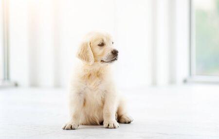 Photo pour Sweet playful puppy at home - image libre de droit