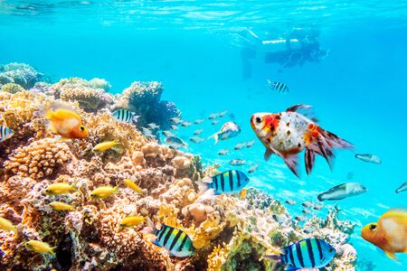 Photo pour Coral reefs and fish, underwater world - image libre de droit
