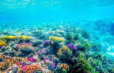 Photo pour Beautifiul underwater seascape with tropical fish and coral reefs - image libre de droit