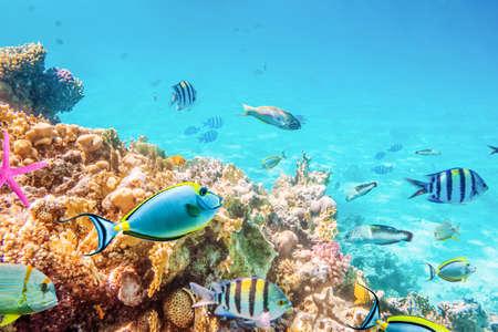 Photo pour Coral reefs and fish and diver, underwater world - image libre de droit