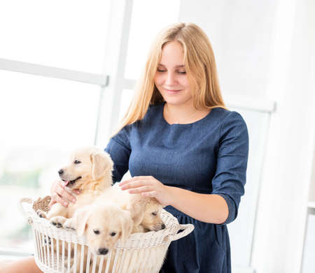 Photo for Happy teenage girl holding basket with retriever puppies indoors - Royalty Free Image