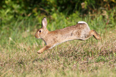 Photo pour Wild cute rabbit is jumping on meadow - image libre de droit