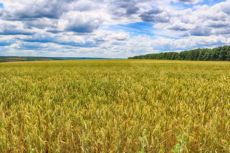 Photo pour Countryside with wheat field and cloudy sky - image libre de droit