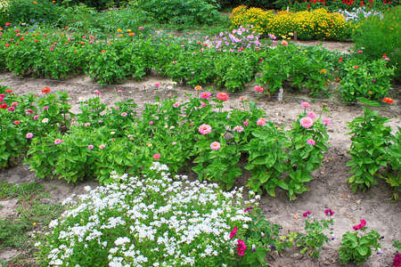 Photo for Flowerbed with different flowers in botanical garden in the summer - Royalty Free Image