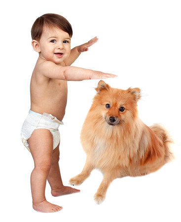 Photo pour Beautiful baby in diaper with a brown dog isolated on a white background - image libre de droit