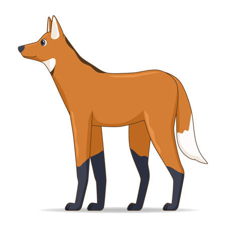 Illustration pour Maned wolf animal standing on a white background. Cartoon style vector illustration - image libre de droit