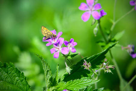 Photo pour Butterfly on flower in summer garden - image libre de droit