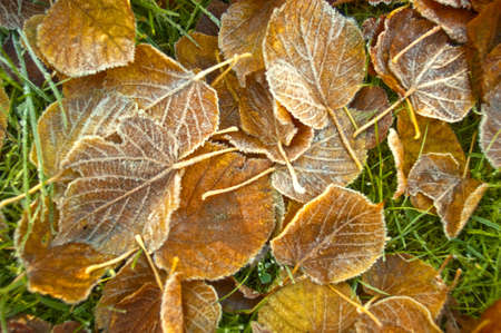 Frost leaves bathed in the early morning autumn sunlight