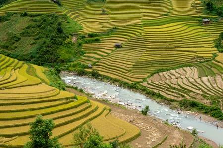 Mu Canh Chai Rice Terrace