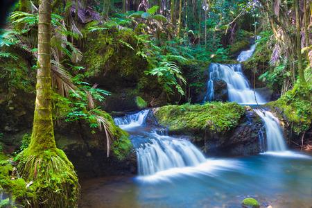Beautiful waterfall in tropical rainforest in Hawaii