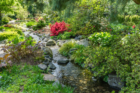 Photo for Red Azalea flowers bloom by a creek in Seatac, Washington. - Royalty Free Image