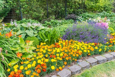 Photo for A view of brilliant Marigolds at Point Defiance Park in Tacoma, Washington. - Royalty Free Image