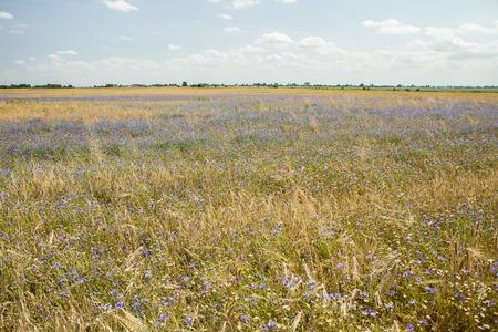 grains panorama