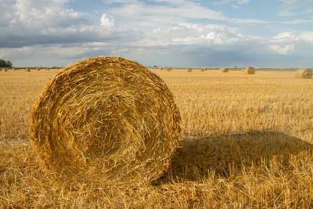 autumn is the harvest of the field