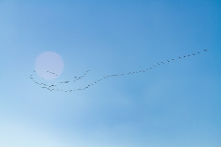 Bbirds flee to the south