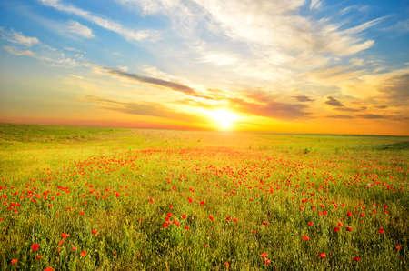 Foto de field with green grass and red poppies against the sunset sky - Imagen libre de derechos