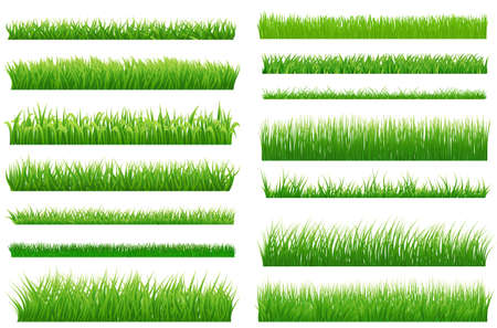 Set of spring green grass horizontal borders. Green grass collection on white background for Your design. Design elements for natural landscape with grass. Various types of green grass. Vectorのイラスト素材