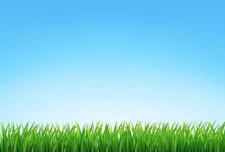 Illustration pour vector green grass and blue sky - image libre de droit