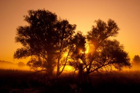 silhouettes of trees in orange sunrise backlit   woodland scene