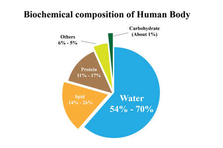 Biochemical composition of Human Body